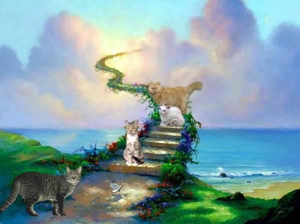 Как пережить смерть любимой кошки? Только не терзайте себя!