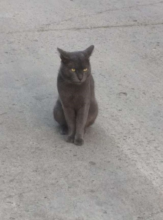 Хозяйка решила узнать, где пропадает ее кот, и записка, прикрепленная к его ошейнику, стала ответом