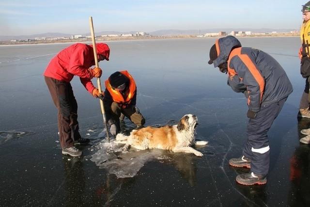 В Забайкалье спасли вмерзшую в озеро собаку - Видео!