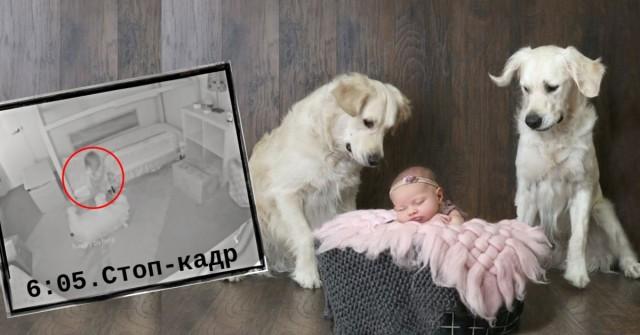 Младенец пропал из закрытой комнаты! Родители срочно включили запись с камеры и обнаружили НЕЧТО…Видео вас сильно удивит!