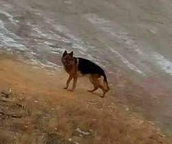 Челябинец потерял свою собаку полгода назад… А недавно, зайдя к врачу с новым питомцем, он чуть не онемел от удивления!