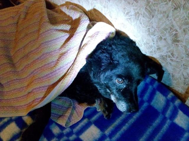 «Она умирала в темноте, в шаге от нас!» На морозе среди поля лежала старенькая больная собака, и шансов выжить у неё не было…