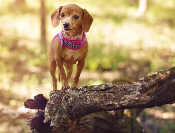 Эту кроху нашли в лесу! С её животом творилось нечто странное — врач предположил рак, но ошибся…