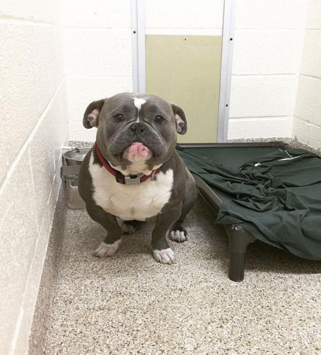 Милый и очень грустный пёс-бегемотик ждал… А на фото 7-ю днями позже ты его просто не узнаешь! )