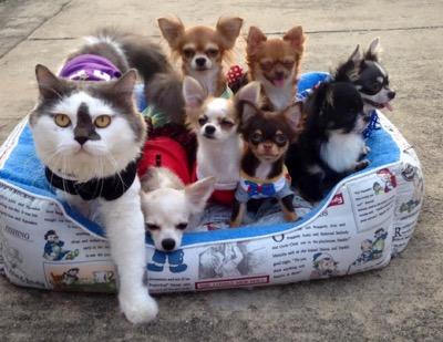 Как кот стал предводителем собачек - Видео!
