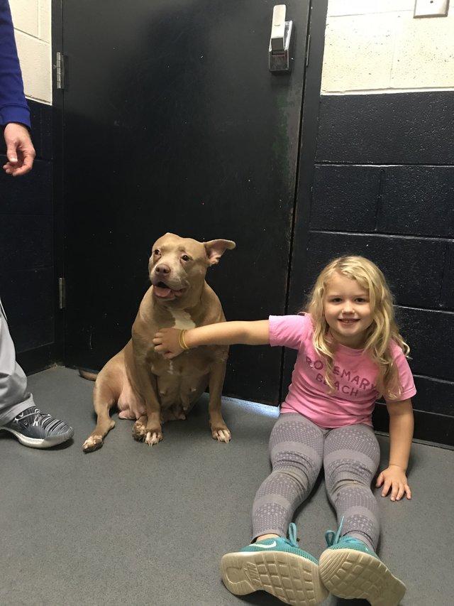 В углу вольера плакала и ждала усыпления самая грустная собака в мире. Женщина решила изменить её судьбу. Видео!