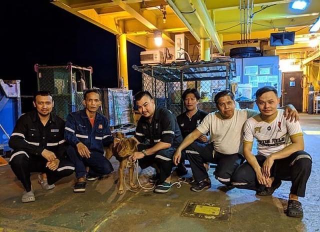 Тайские нефтяники выловили из моря собаку, которая была обнаружена посреди Сиамского залива в217километрах отберега. Видео!